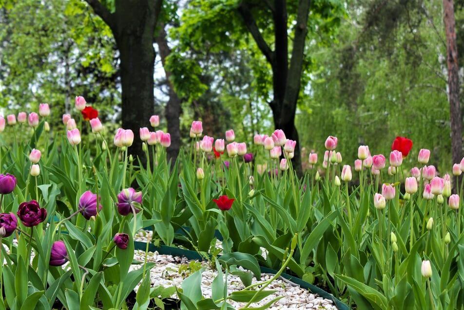Choose a color theme for your spring garden.