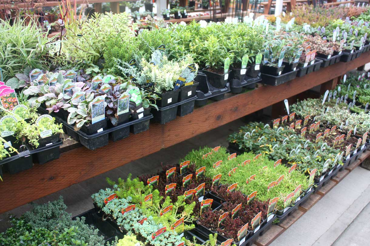 Plants   Bark And Garden Center