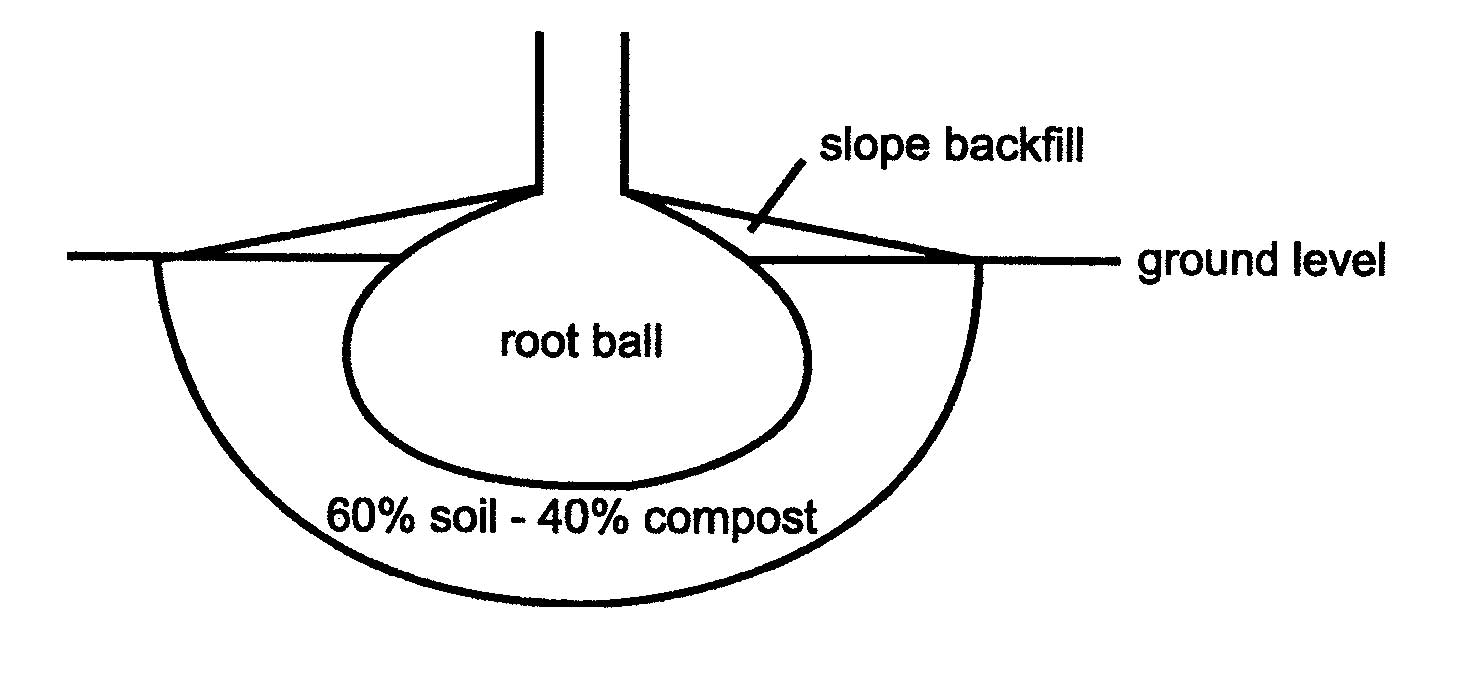 Planting Intructions
