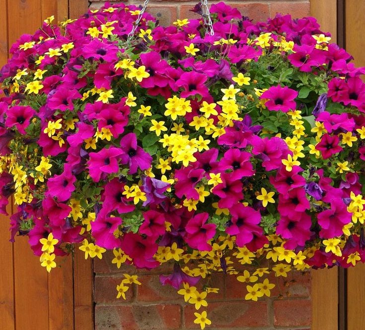 A beautiful hanging basket with pink and yellow flowers.
