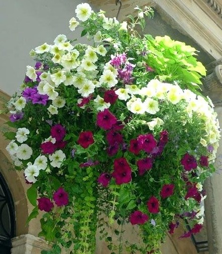 A stunning hanging basket with white and pink flowers.